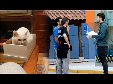Firmas contra el gato de Schrödinger | Recogida para parar los experimentos