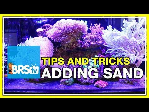 Can you add sand to a bare bottom tank? | 52 FAQ