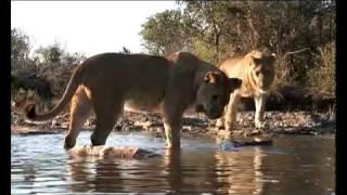 ZIMBABWE- A WORLD OF WONDERS
