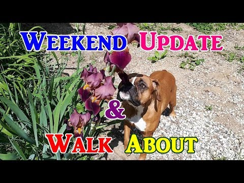 Weekend Update & Walk About (June 22 2019)