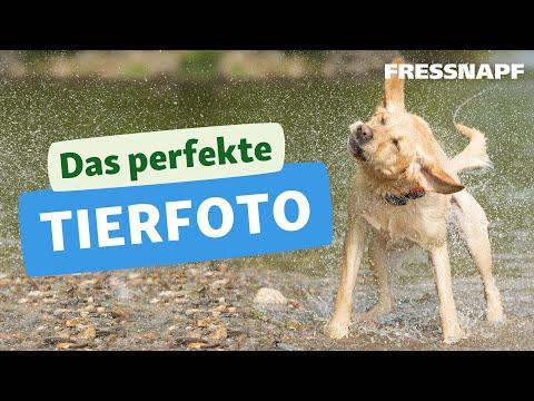 10 Tipps für das perfekte Tierfoto - Tutorial zur Tier-Fotografie
