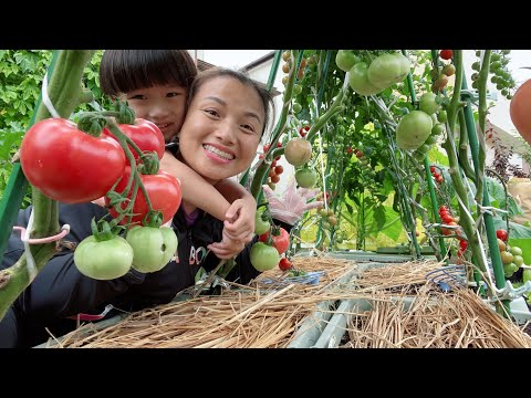 Dạo quanh 1 vòng sân, hái nhẹ 2 mẹt 10 loại rau củ tươi xanh thấy mê chưa bà con ơi … #947