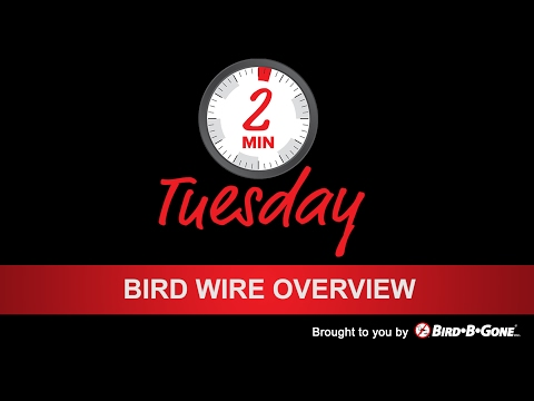 Bird Wire Installation Overview
