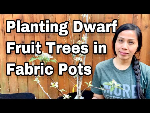 Planting Dwarf Fruit Trees In Fabric Pots