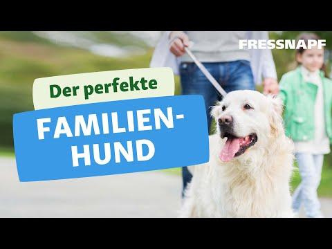 5 tolle Familienhunde