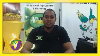 Food Shortage Looming TVJ Smile Jamaica - November 25 2020