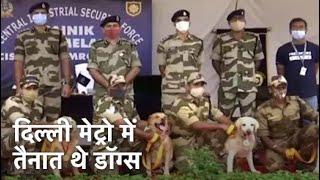 DMRC में तैनात CISF के 7 स्निफर डॉग्स 10 साल की सर्विस के बाद रिटायर - NDTVINDIA