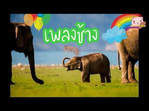 เพลงช้าง