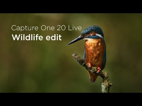 Capture One 20 | Quick Live : Wildlife edit