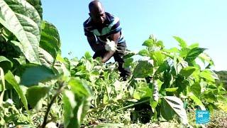 Italie : un groupe de migrants monte une coopérative agricole