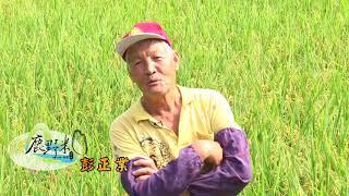 2017鹿野米