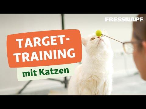 Tricks mit deiner Katze? So geht's! - Targettraining mit Katzen