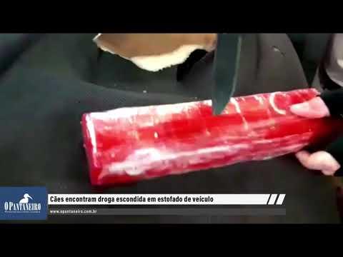 Cães encontram droga escondida em estofado de veículo
