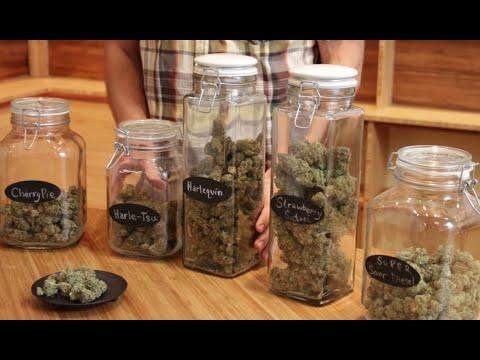 Marijuana strain-guide for beginners