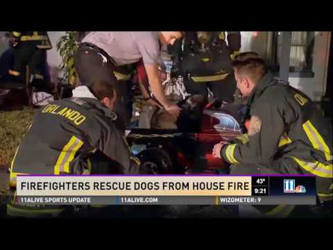 Hero Central by Montlick & Associates - Firefighters Rescue Dogs From House Fire