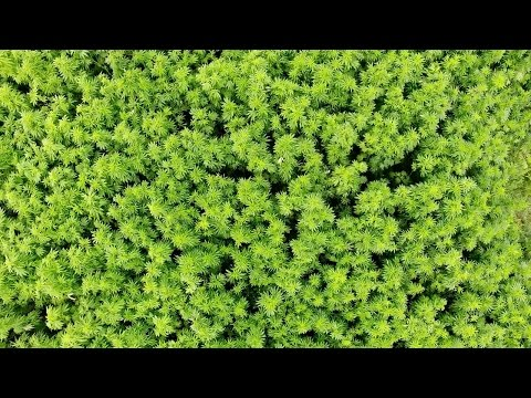 Why Hemp Matters | Kind of a Wonder Crop