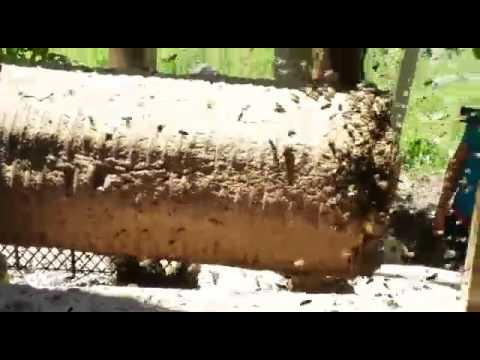 brings bee hive