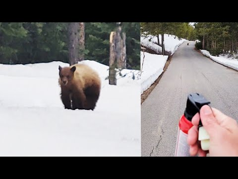 'I'm Not Your Food!' Runner Gets Confronted by Black Bear