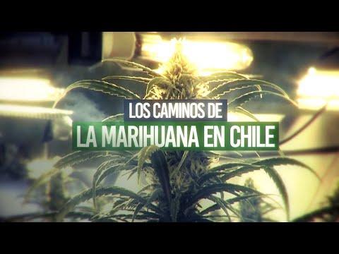 La ruta de la marihuana en suelo chileno - #ReportajesT13