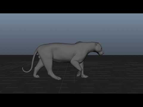 Tiger Walk Cycle Progress V001