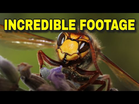 🐜 FASCINATING ~ THE WONDERS OF NATURE 🐝 GROUND WASP HARD AT WORK 🐝AMAZING LOOK AT A WASP'S LIFE