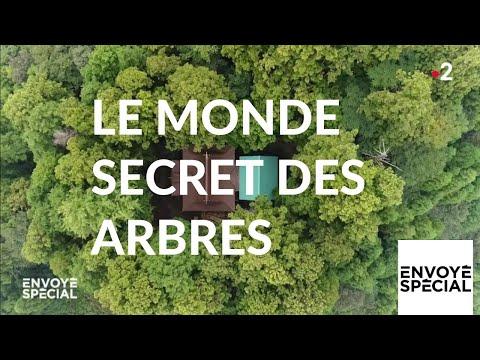 Nouvel Ordre Mondial - Envoyé spécial. Le monde secret des arbres - 7 mars 2019 (France 2)
