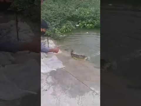 ปล่อยปลา-ทำทานต่อชีวิตให้พวกเจ