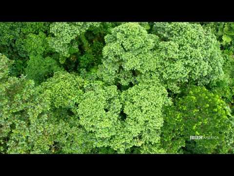 Visual Soundscapes - Jungles | Planet Earth II | BBC America