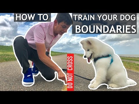 How To Start Teaching Your Dog Boundaries