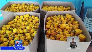 Cuba: Diversifica ofertas de #exportación y ventas Empresa Agropecuaria Valle de Yabú
