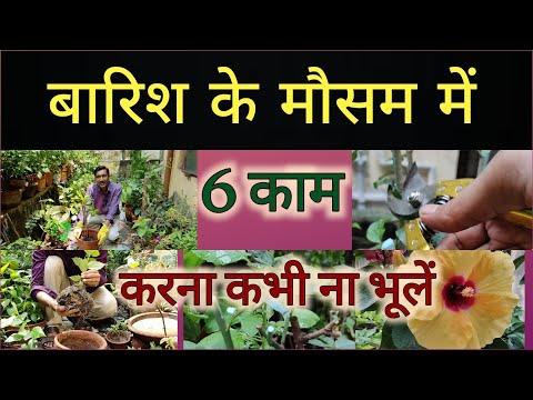 बारिश के मौसम में ये 6 काम करना कभी ना भूलें , पौधे में ग्रोथ देखने लायक होगी/ 6 Monsoon season duty