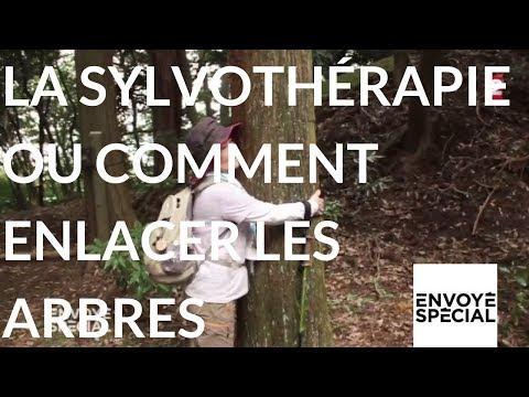 nouvel ordre mondial | Envoyé spécial. La sylvothérapie ou l'art enlacer les arbres 26 octobre 2017 (France 2)