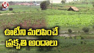 Special Story On Telangana Ooty Gandhari | Gandhari Nature Beauty Attracts Public | V6 News - V6NEWSTELUGU