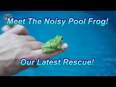 Our Pool Frog Rescue