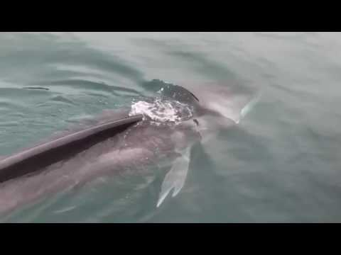 Balea Getarian