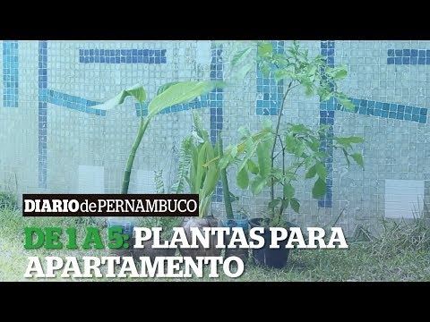 De 1 a 5: Plantas para Apartamento