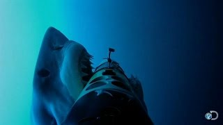 SharkCam Takes Massive Hit | Shark Week