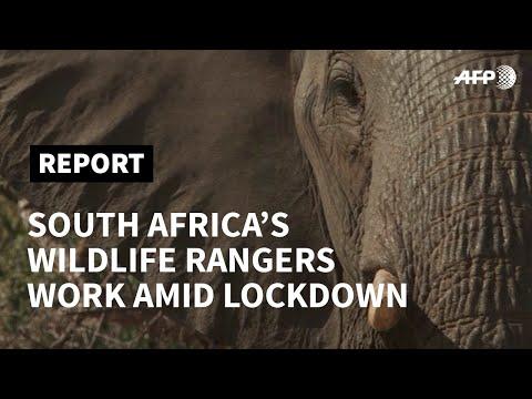 South Africa's anti-poaching rangers on duty despite lockdown | AFP photo