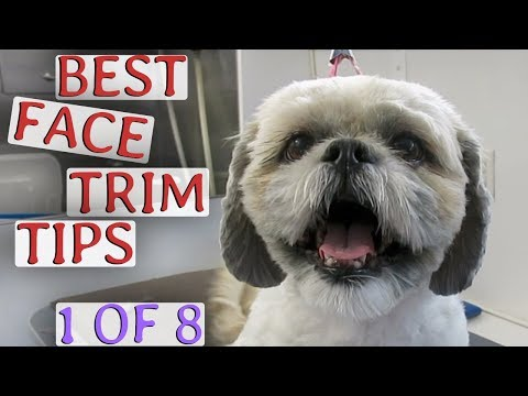 Best face trimming how-to (1 of 8)
