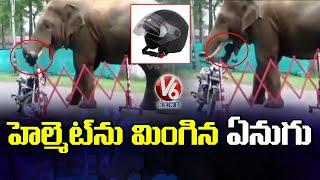 హెల్మెట్ను మింగిన ఏనుగు   Elephant Eats Helmet In Guwahati   Assam   V6 News - V6NEWSTELUGU