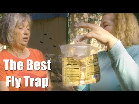 The 1 Best Fly Trap For Your Chicken Coop