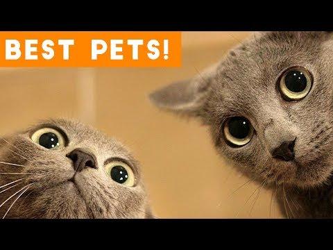 Best Animal Videos of 2018 (so far) | Funny Pet Videos