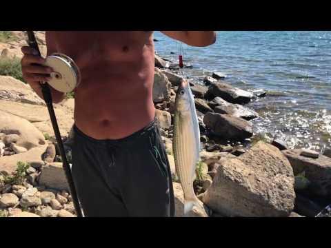 Каспий рыбалка тарашка