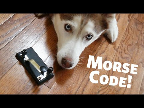 Learn your Name in Morse Code Day with Laika the Husky