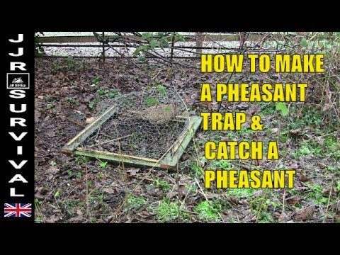 How To Make A Pheasant Trap & Catch A Pheasant