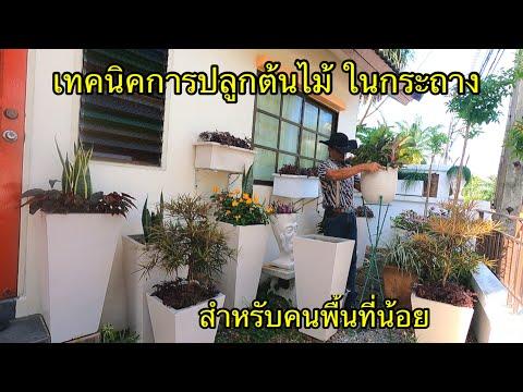 เทคนิค-การปลูกต้นไม้ดอกไม้-ในก