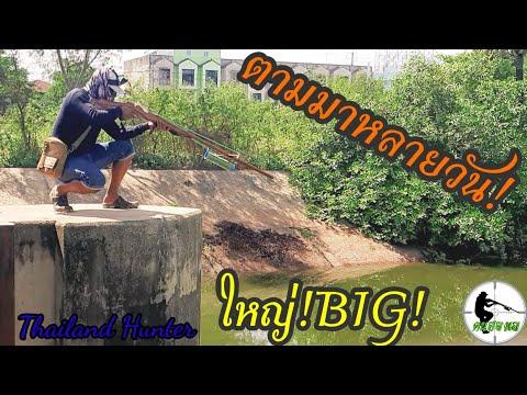 SHOOT-FISH-ยิงปลาชะโดใหญ่-มาเป