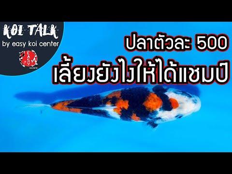 Koi-Talk-EP.12-ปลาตัวละ-500-บา