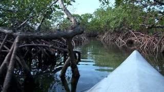 Lucayan National Park Kayak Experience