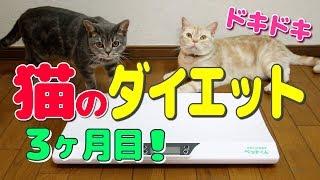 子猫 6ヶ月 カロリー『【猫のダイエット#5】3ヶ月経過した結果!- Cat's diet -』などなど